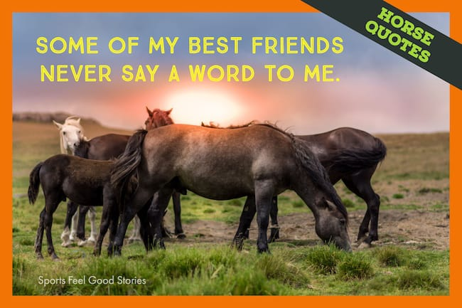 Horse quotes image