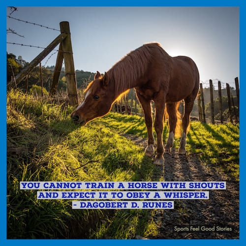training a horse quote