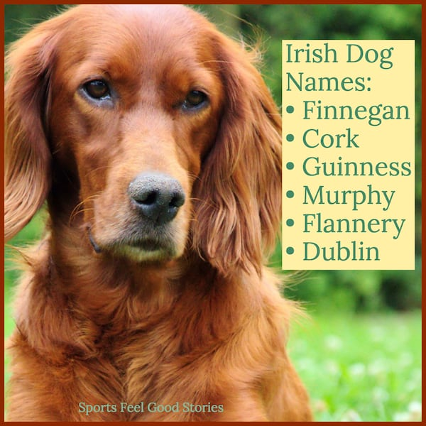 Irish naming ideas for dogs image