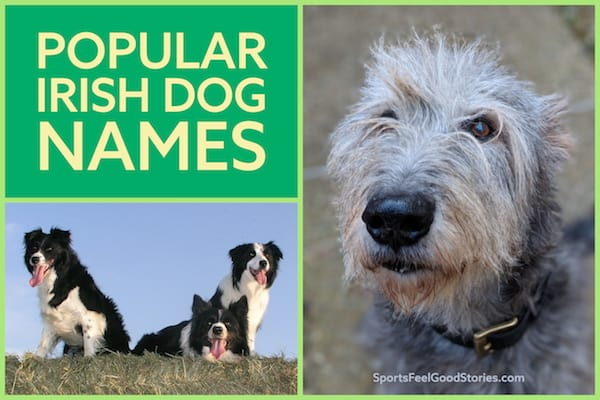 Popular Irish Dog names image