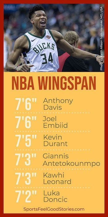 NBA Players' wingspans