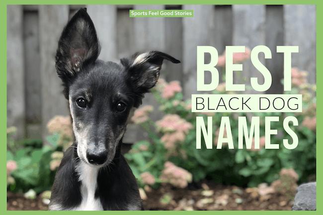 Best black dog names