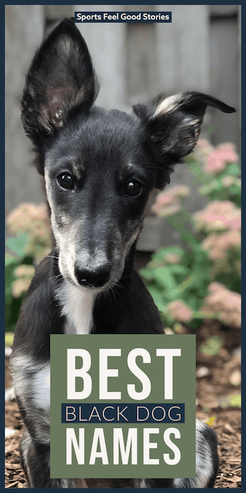 Creative and clever monikers for canines