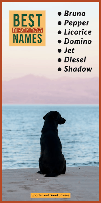 Good names for black dogs
