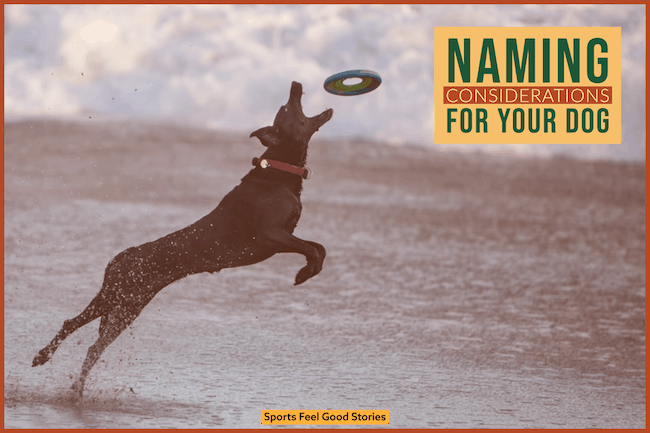 Naming considerations for your dog