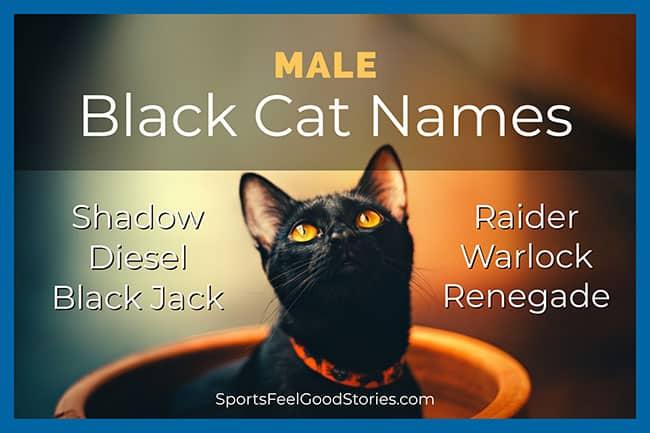 black cat names male
