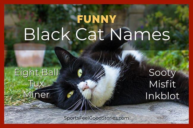 funny black cat names