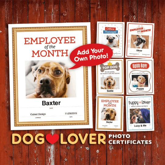 dog photo certificates