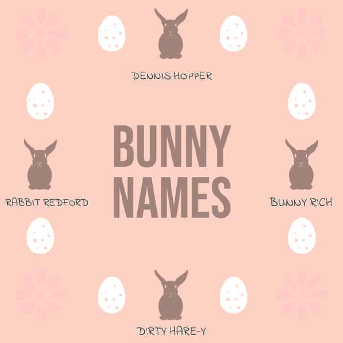 Bunny Names Funny