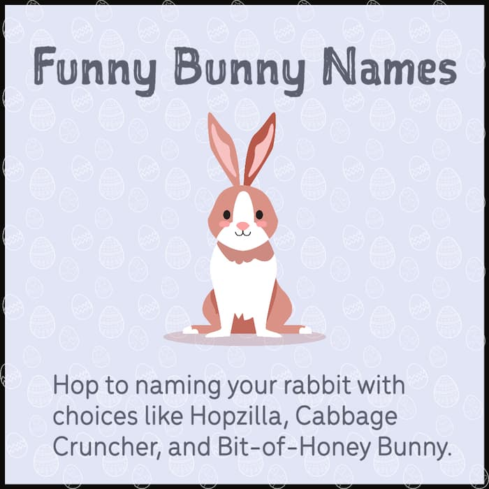 Clever bunny names
