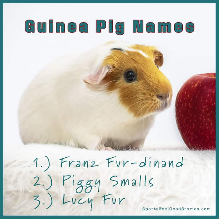 Clever and funny guinea pig names
