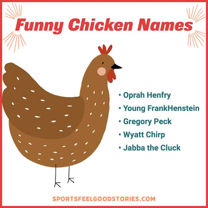 Really funny choices for chicken names